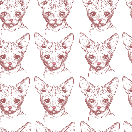 Seamless pattern with hand drawn sphynx cat Illustration