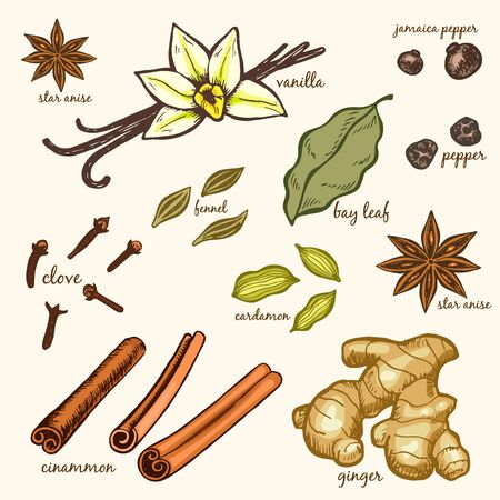 Herbs and spices sketch set