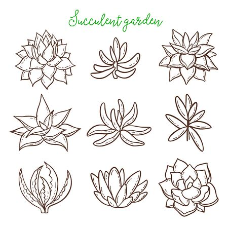 Succulents. Cacti line drawn on a white background. Flowers in the desert. 矢量图像