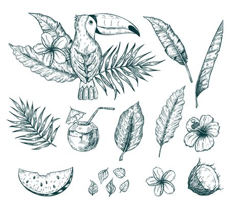 Hand drawn vector tropical summer sketch set with palm tree leaves, coconut drink, hibiscus and plumeria flowers and juicy watermelon