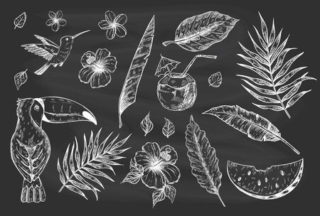 Hand drawn vector tropical summer sketch set with palm tree leaves, toucan, coconut drink, hibiscus and plumeria flowers and juicy watermelon on a blackboard background 矢量图像