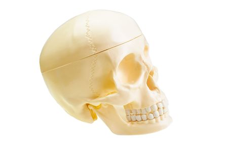 brainpan: The artificial skull is isolated on a white background