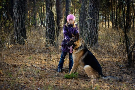 The girl in an autumn pine wood walks with the German shepherd Stock Photo