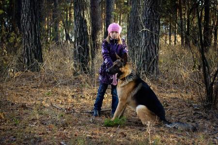The girl in an autumn pine wood walks with the German shepherd Stock Photo