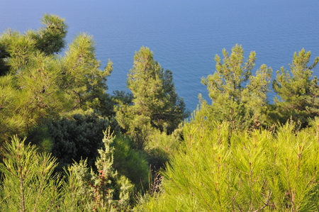 range of motion: trees beside the beach