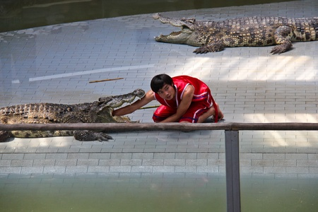 showman: Crocodile show at Sriracha Tiger Zoo in Thailand, the showman is putting his hand into crocodiles mouth