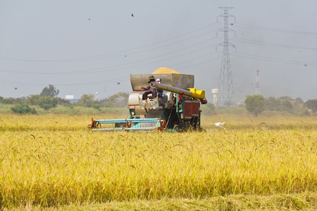 Rice harvesting with combine harvester, Thailand photo