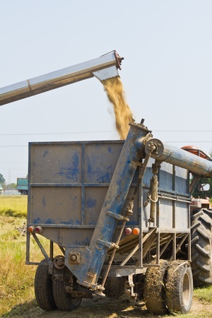 Handling of rice from combine harvester to small truck photo