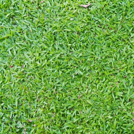 Natuurlijke outdoor groene gras breedbladige tapijt gras textuur in de schaduw, vierkant bijgesneden