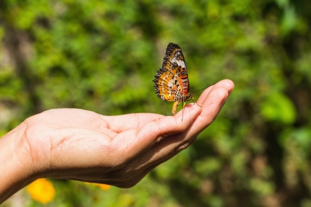 The leopard lacewing  Cethosia cyane euanthes  butterfly on human hand Stock Photo - 16959059