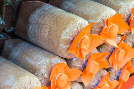Close up of mushroom bag culture ready for cultivation Stock Photo - 17353876