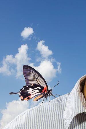 Great mormon butterfly perching on business man s shoulder, supporting concept photo