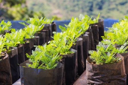 Bloem plantaardige reproductie, nieuwe jonge bloem plant in aparte pot Stockfoto