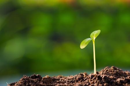 Groene spruit groeit uit de grond, nieuw of start of begin begrip