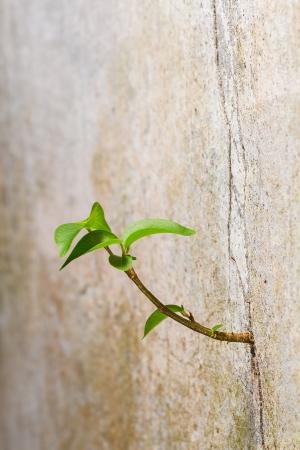 갈라진 금: 새 공장은 균열 콘크리트 벽, 생존의 지속성에서 발아 스톡 사진