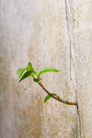 New plant germinates from the crack concrete wall, persistence of survival