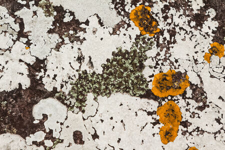 kradueng: Texture of different type lichens on rock surface in Phu Kradueng national park, Thailand Stock Photo
