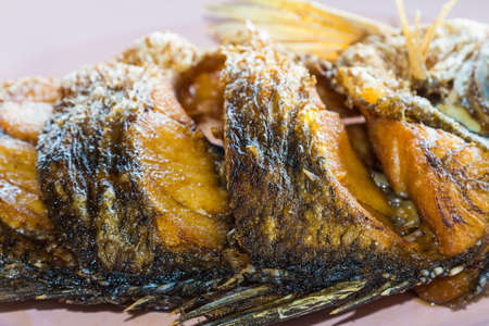 calcarifer: Close up of fried Barramundi or Asian seabass  Lates calcarifer  fish Stock Photo