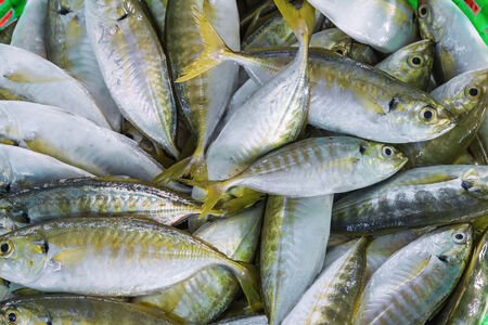 Close up of short mackerel or shortbodied mackerel  Rastrelliger brachysoma  in green basket for sale photo