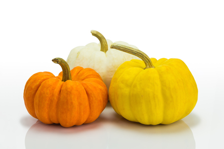 Decorative pumpkins or miniature pumpkins in different color, on white background photo