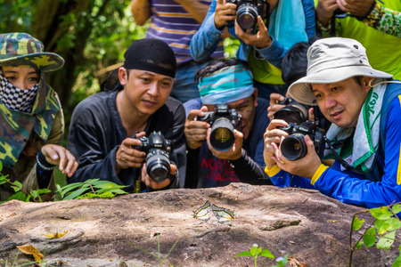PRACHINBURI, THAILAND - 16 AUGUST 2014 - Unidentified photographers take macro photos of butterflies in nature at Thap Lan National Park. Editorial