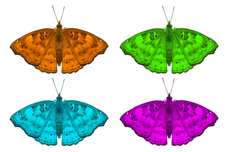 stomach bug: Close up of fancy color female Black Prince Rohana tonkiniana siamensis butterflies isolated on white background with clipping path Stock Photo
