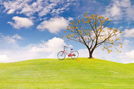 cotton flower: Silk Cotton flower treeon green grass field in clear sky and a bicycle on the grass field