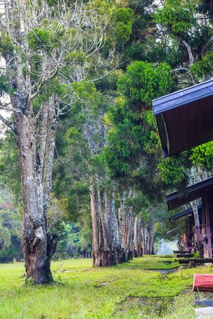 lodging: Walking trail and pine trees in a row in front of lodging houses on Phu Kradueng National Park, Loei province, Thailand Stock Photo