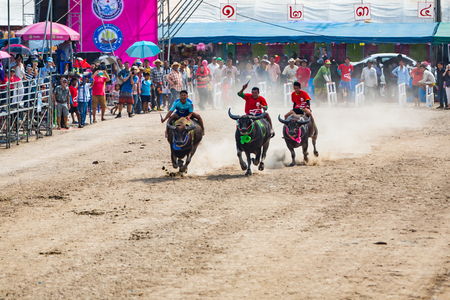 racing festival: CHONBURI, THAILAND - 26 OCTOBER 2015 - Unidentified participants in the 144th Chonburi Buffalo Racing Festival on October 26, 2015 in Chonburi province, Thailand.