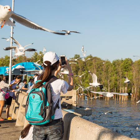 samut prakan: SAMUT PRAKAN, THAILAND - 14 JANUARY 2016 - Tourist woman takes picture of flying seagulls with her mobile phone at Bang Pu Seaside Resort, Thailand.