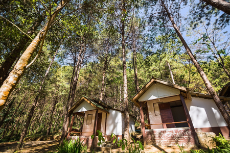 hospedaje: Vista de ángulo amplio de casas de alojamiento entre los árboles de pino en el embalse de Pang Pang Ung Tong, provincia de Mae Hong Son, Tailandia