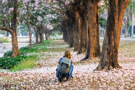 nakhon pathom: Tourist woman take the picture of blooming Pink Trumpet Tabebuia rosea trees at Kamphaeng Saen, Nakhon Pathom province, Thailand