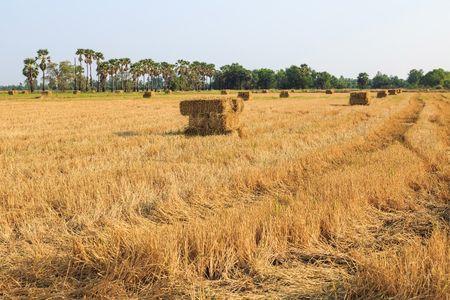 hayrick: Haystack or rice straw bale on rice field after harvesting, Thailand