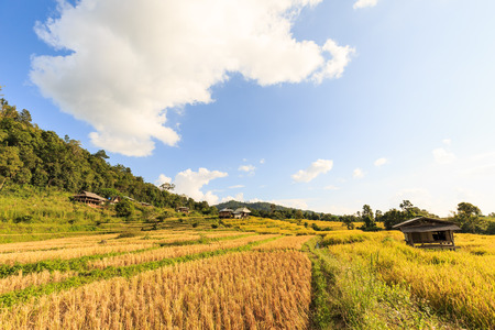 Terraced rice field with rice stubble left after harvesting at Ban Pa Pong Piang, Chiang Mai province, Thailand