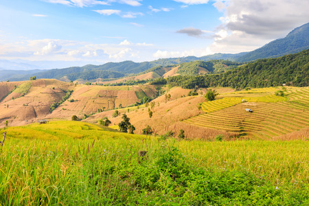 Terraced rice field (during harvesting time) at Ban Pa Pong Piang in the evening, Chiang Mai province, Thailand Stock Photo