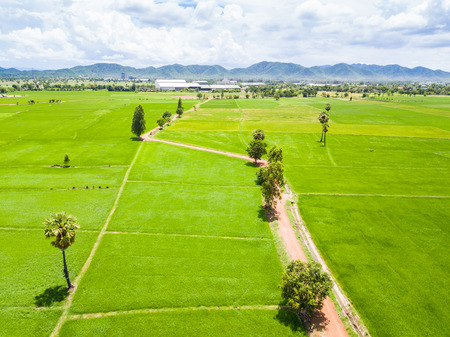 Rice paddy and dirt road, aerial view from drone, Thailand
