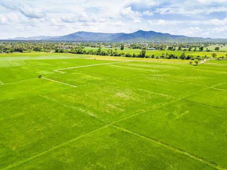 Rijst Paddy, Luchtfoto van Drone, Thailand