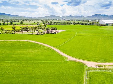 Rijstveld en landweg, luchtmening van hommel, Thailand Stockfoto - 81422840