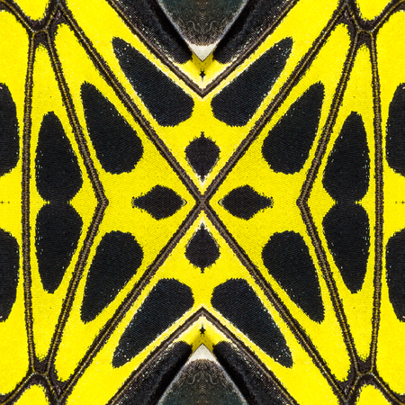 Background created from part of Golden Birdwing (Troides aeacus) butterfly wings, texture showing minute scales Imagens