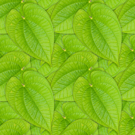 Seamless background of green leaf blade of vine plant Stock Photo