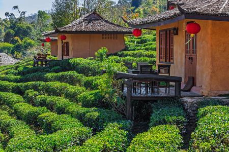 Small cob houses among the tea plantation on the hill slope at Ban Rak Thai (Thai loving village), Mae Hong Son province, Thailand