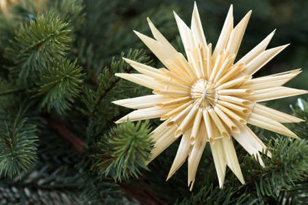 boughs: Full frame image of a straw star with fir boughs.