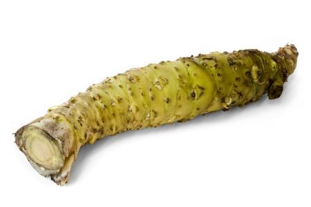 hotness: Isolated fresh wasabi root also called Japanese horseradish with white background. Stock Photo