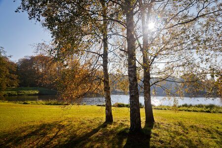 Birch trees at the lake with backlight in autumn. photo