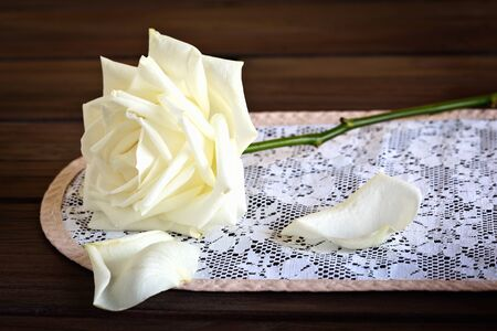 doiley: Still life with a white rose on a doily.
