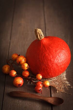 cucurbita: Autumn pumpkin still life with copy space.