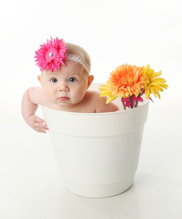 Portrait of an adorable baby girl sitting in a white flower pot along with bright gerbera daisies photo