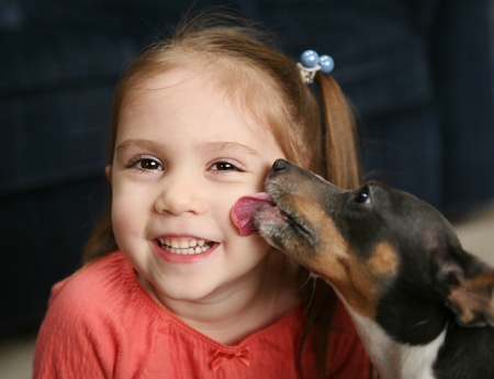 Portrait of a beautiful smiling young girl being licked on the cheek by a cute terrier puppy dog photo