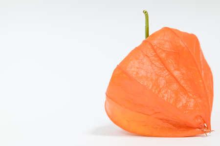 Fruit of physalis