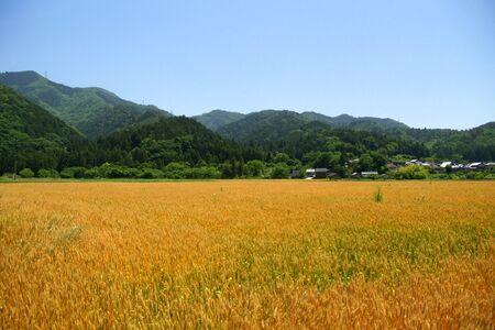 麦畑 写真素材 - 87256718